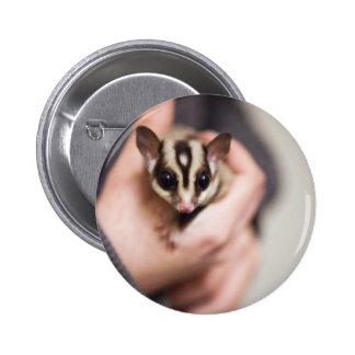 Sugar Glider button