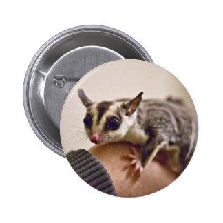 Sugar Glider buttons