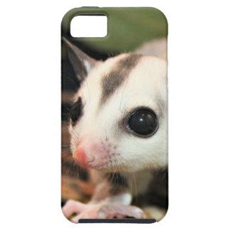 Sugar Glider iPhone 5 Covers