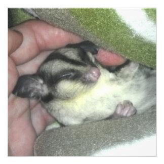 Sugar Glider Sleeping in Blanket Custom Invites