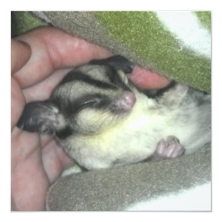 Sugar Glider Sleeping in Blanket 5.25x5.25 Square Paper Invitation Card