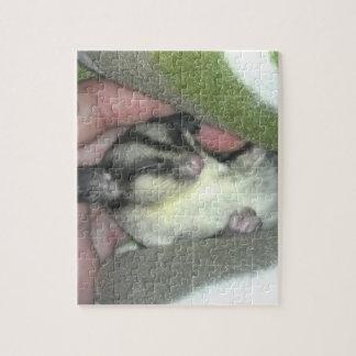 Sugar Glider Sleeping in Blanket Puzzles