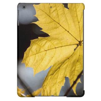 Sugar maple, fall iPad air cases