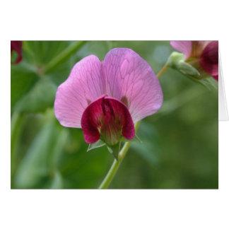 Sugar Snap Pea Flower Card