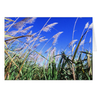 Sugarcane Field Greeting Card