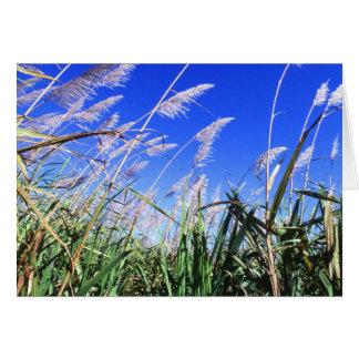 Sugarcane Field Greeting Card