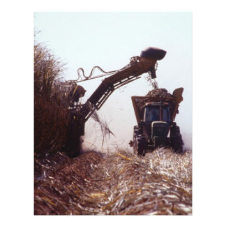 Sugarcane harvest 21.5 cm x 28 cm flyer