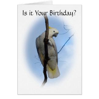 Sulphur Crest Cockatoo Birthday Card