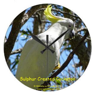 Sulphur Crested Cockatoo Wall Clocks