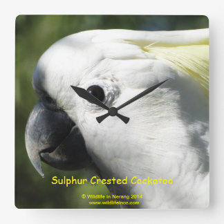 Sulphur Crested Cockatoo Square Wallclocks