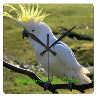 Sulphur-Crested Cockatoo in Australia Clock