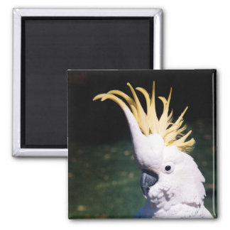 Sulphur-crested Cockatoo Magnet