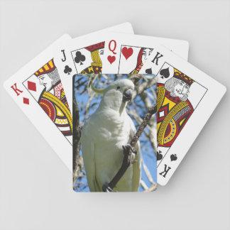 Sulphur Crested Cockatoo Card Deck