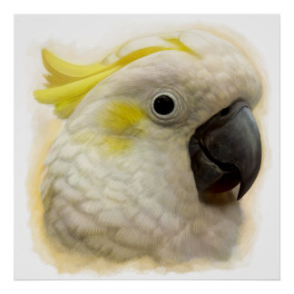 Sulphur Crested Cockatoo realistic painting Poster