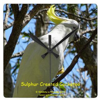 Sulphur Crested Cockatoo Wallclock