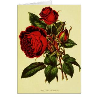 Sultan of Zanzibar Rose Card