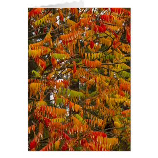 Sumac tree in autumn color in Whitefish, Card