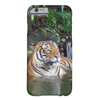 Sumatra tiger barely there iPhone 6 case