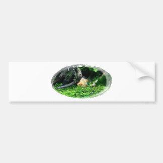 sumatrabarb26052559 bumper sticker