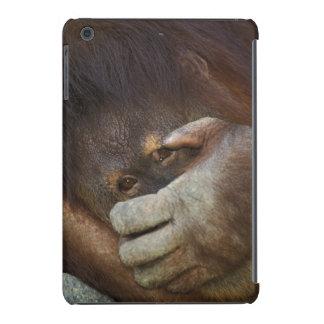 Sumatran Orangutan, Pongo pygmaeus iPad Mini Retina Cases
