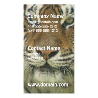 Sumatran Tiger Business Card Templates