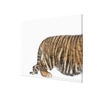 Sumatran Tiger cub Canvas Print