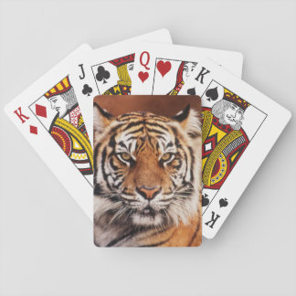Sumatran Tiger, Panthera tigris Playing Cards