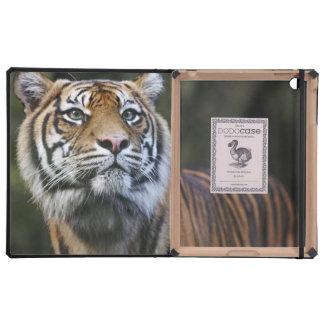Sumatran Tiger (Panthera tigris sumatrae) Cases For iPad