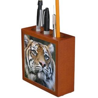 Sumatran Tiger (Panthera tigris sumatrae) Desk Organisers