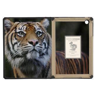 Sumatran Tiger (Panthera tigris sumatrae) iPad Mini Covers