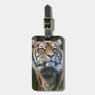 Sumatran Tiger (Panthera tigris sumatrae) Luggage Tag