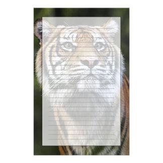 Sumatran Tiger (Panthera tigris sumatrae) Stationery Design
