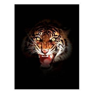 Sumatran Tiger Postcard