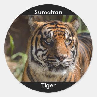 Sumatran Tiger Classic Round Sticker