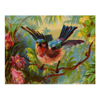 Summer Bluebird Postcard