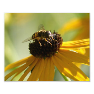 Summer Buzz Collection 10 x 8 Photographic Print