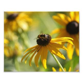 Summer Buzz Collection 1 Photo Print