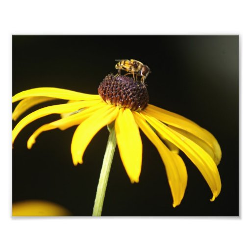 Summer Buzz Collection 4 Photographic Print