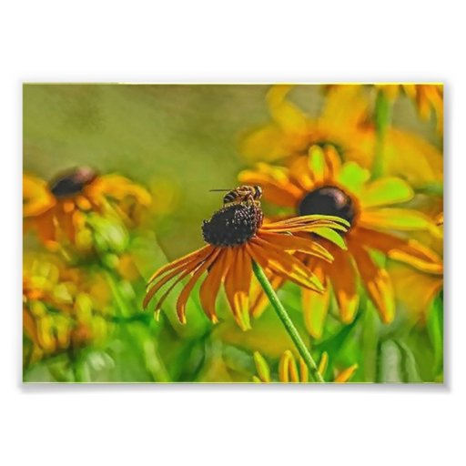 Summer Buzz Collection 7 x 5 Photographic Print
