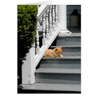 Summer Cat Nap Greeting Card