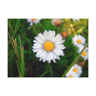 Summer Daisy Stretched Canvas Prints