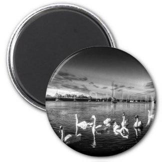Summer evening swans refrigerator magnet