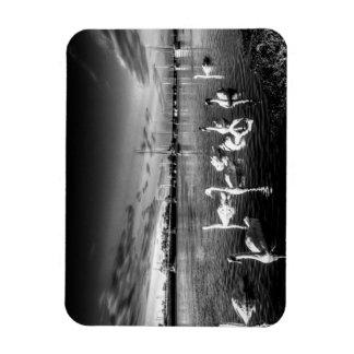 Summer evening swans magnet