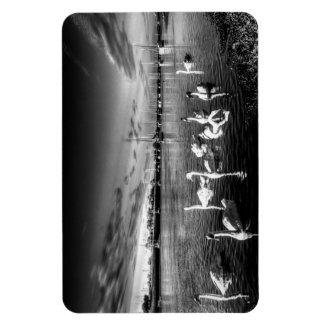 Summer evening swans rectangle magnet