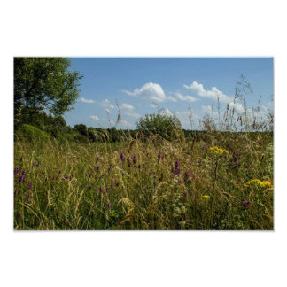 Summer fields and wildflowers poster