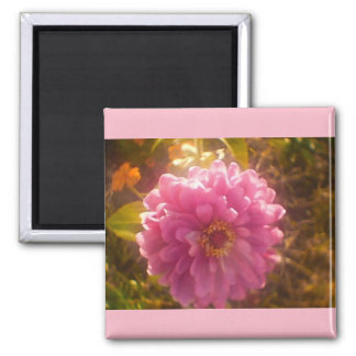 Summer Flower Carnation Magnet