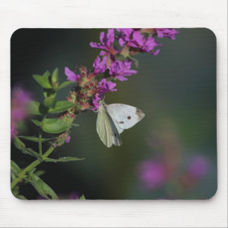 Summer Garden mousepad