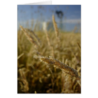 Summer Grasses Card