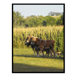 ~ Summer in Lancaster County ~ 92 Postcard
