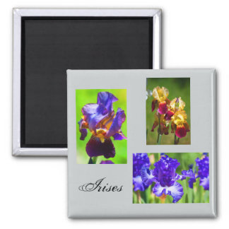 Summer Iris Magnet
